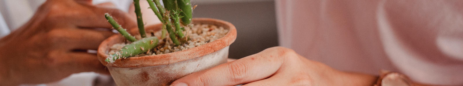 image of a potted succulent being held by hands