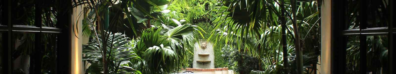 image of a shady garden full of palms with a fountain in the background