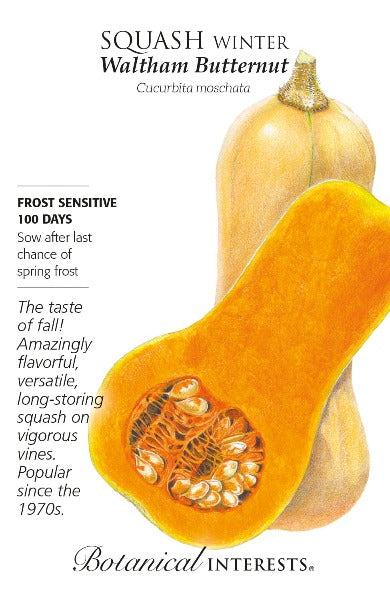 seed packet with drawing of butternut squash cut in half exposing flesh