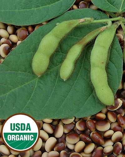 image of three green soybean pods sitting on a large ovoid leaf, on top of a layer of dried soybeans.  U S D A organic logo in lower left corner
