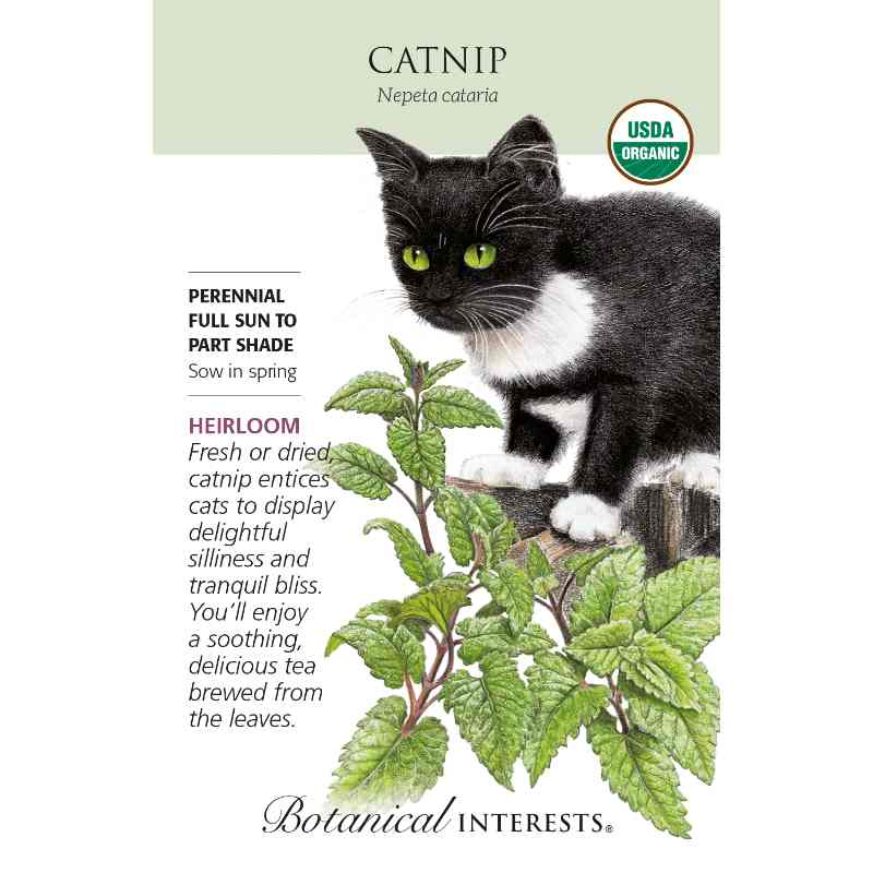 seed pack with drawing of catnip plant and black and white cat