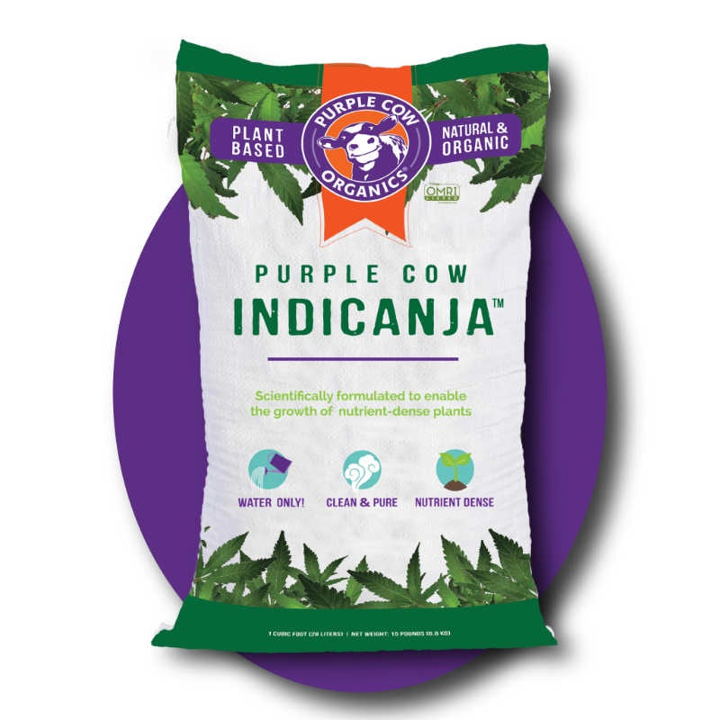 photo of Purple Cow Indicanja bag with purple logo at the top, images of cannabis leaves at the top and bottom, and name of product written in bright green.  Large purple oval behind image of bag.