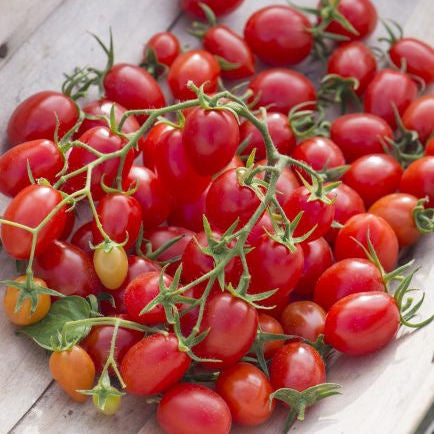image of a large group of small red grape shaped tomatoes attached to a vine, sitting on a wooden platform