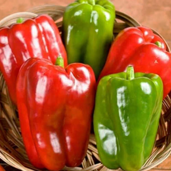 image of five big bertha peppers in a basket....three bright red and two bright green