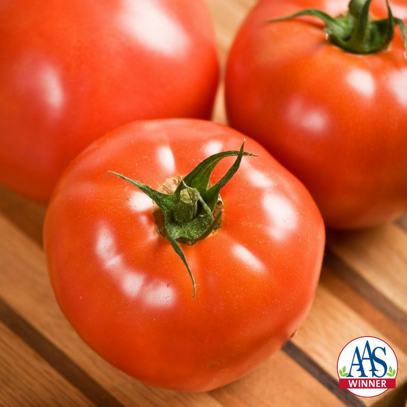 image of 3 red tomatoes close up with AAS Winner logo in lower right corner