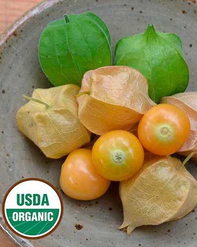 image of yellow cherries, along with husked cherries in bright green and pale yellow ripened husks.  U S D A organic logo in lower left corner.