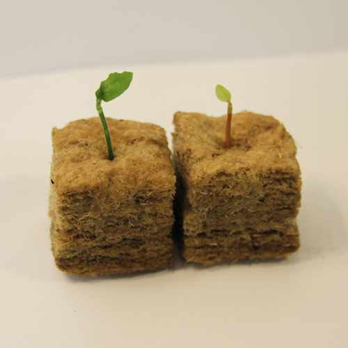 image of two small growing cubes, each with a seedling coming out of the top