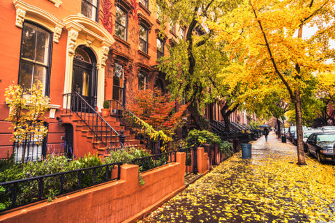 Park Slope Brownstones in the fall