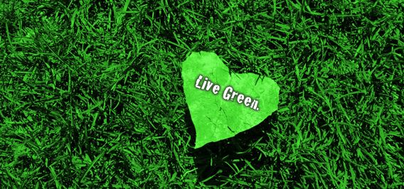 Live Green ~ Tips for embracing a greener lifestyle