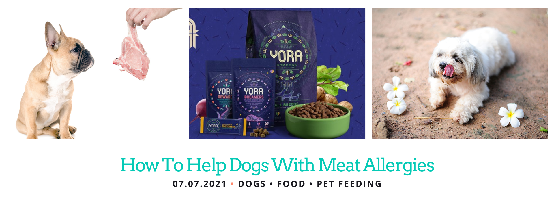 Dogs Allergic to Meat Protein