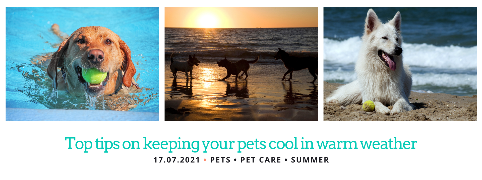 How to Keep your wet cool in warm weather