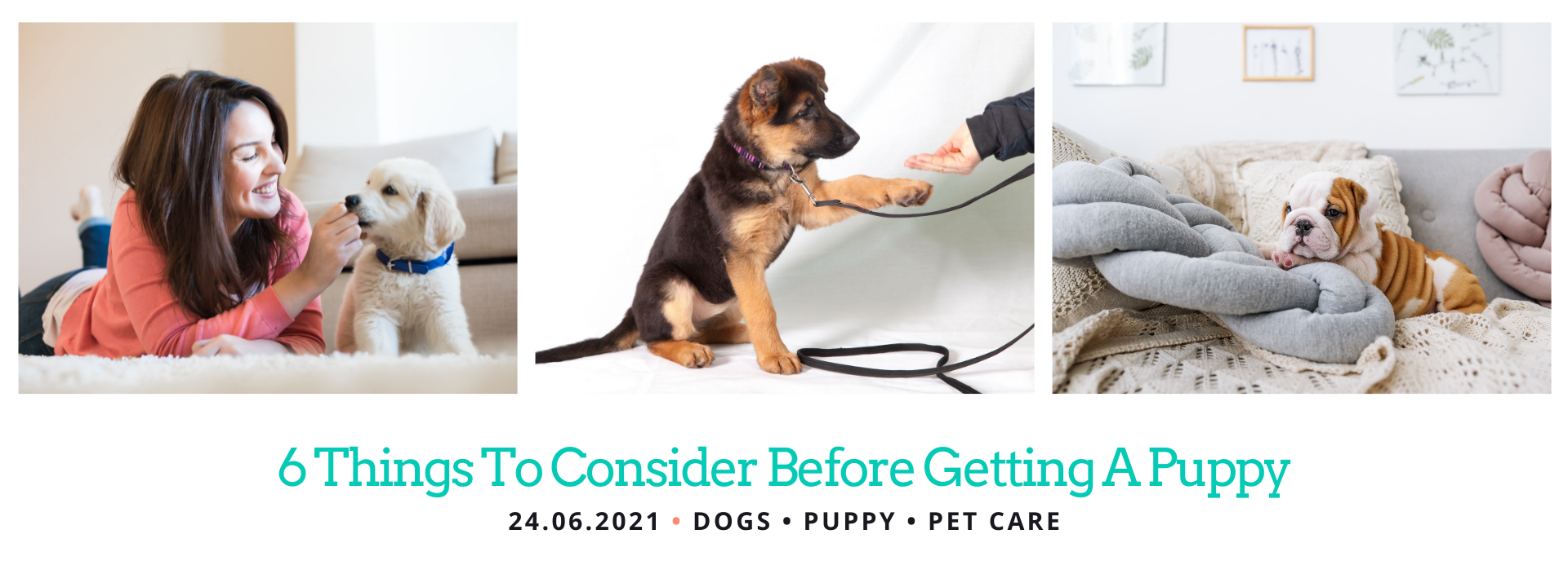 What to Consider When Getting a Puppy