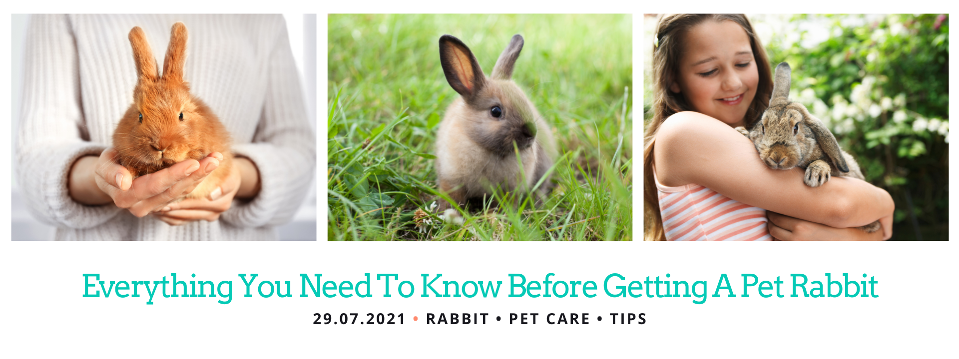 Before getting a Pet Rabbit