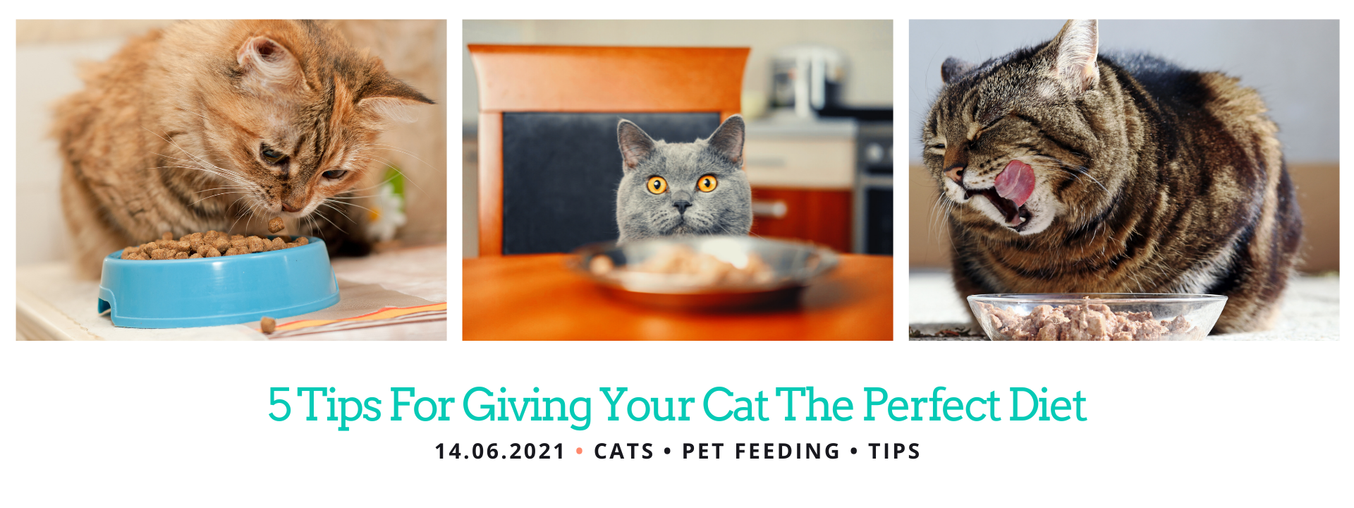Diet Tips for Cats