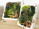 Airplant Greenwall Workshop