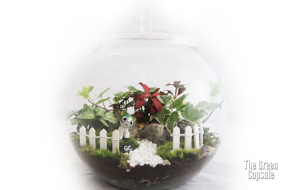Terrarium - Stacy