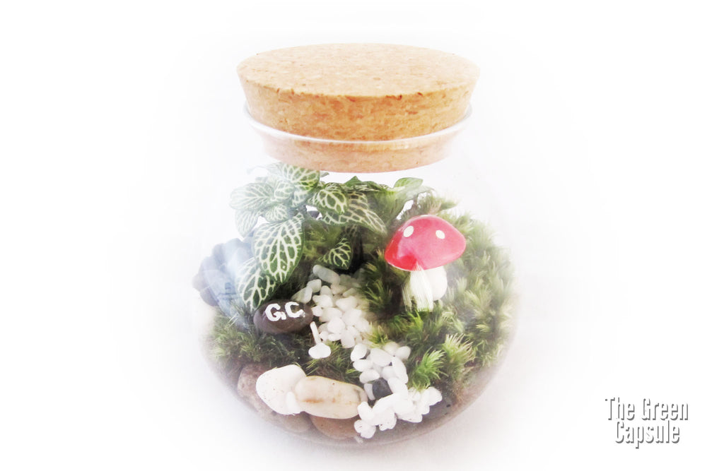 Terrarium - Mushroom in the Bottle