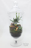 Star Wars Terrarium