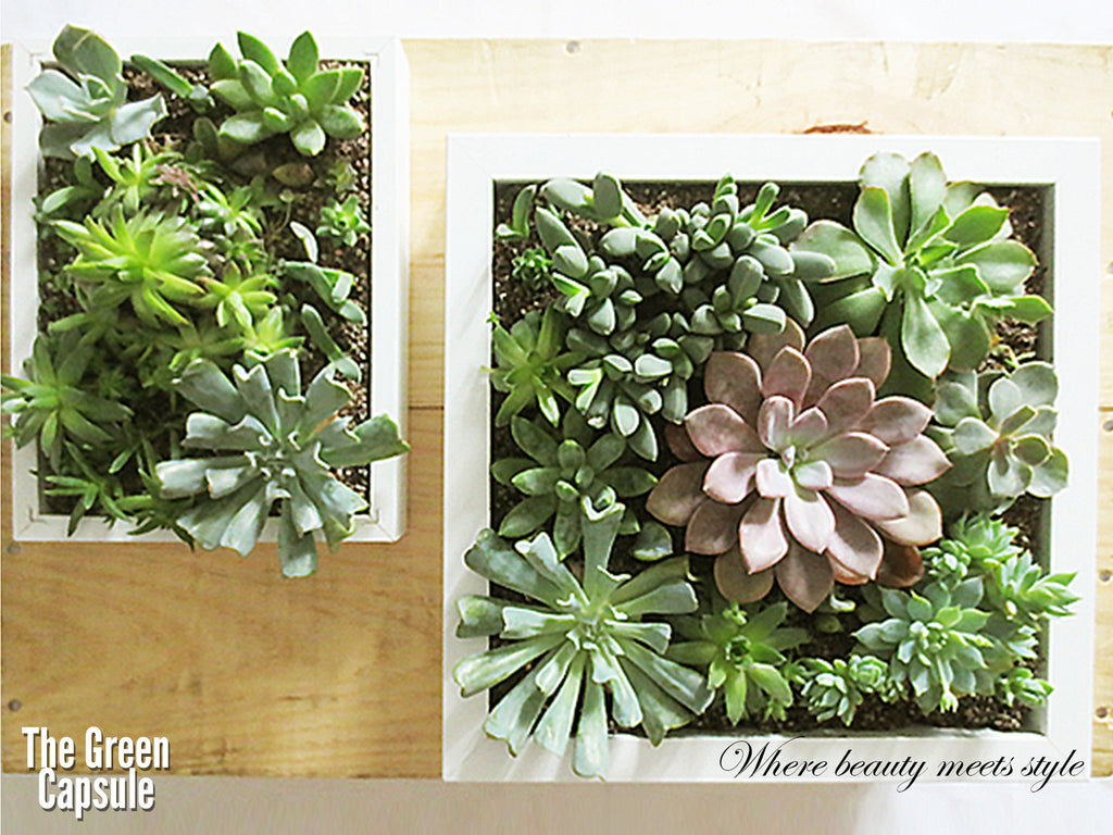 Succulent Greenwall The Green Capsule