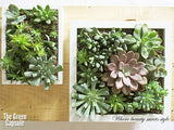 Succulent Greenwall