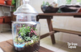 Terrarium - Totoro & Chibi by the river with other decor