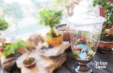 Terrarium - Waterfall at balcony decor