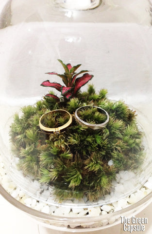 Wedding terrarium