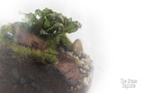 Terrarium - Drifting close up