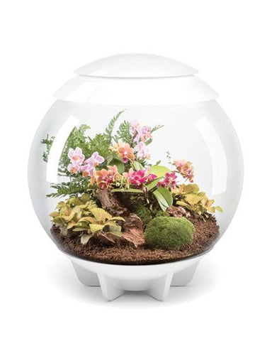 Terrariums Green Capsule The Green Capsule
