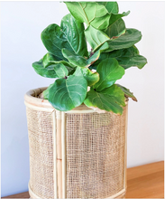 Load image into Gallery viewer, Lulu Small Single Webbed Planter