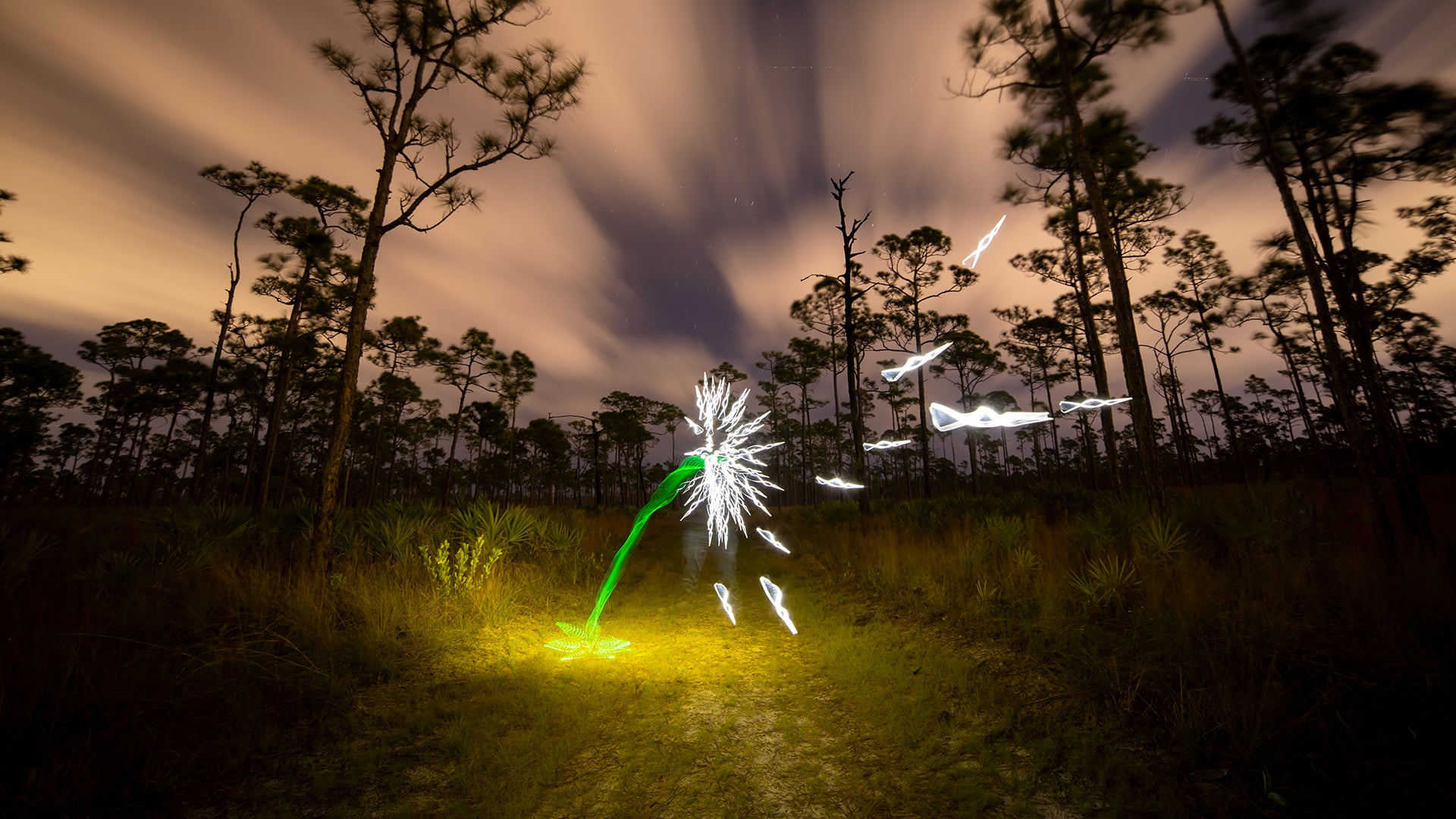 Light Painting, How To Light Paint a Flower