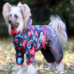 Pretty-dog-with-clothes