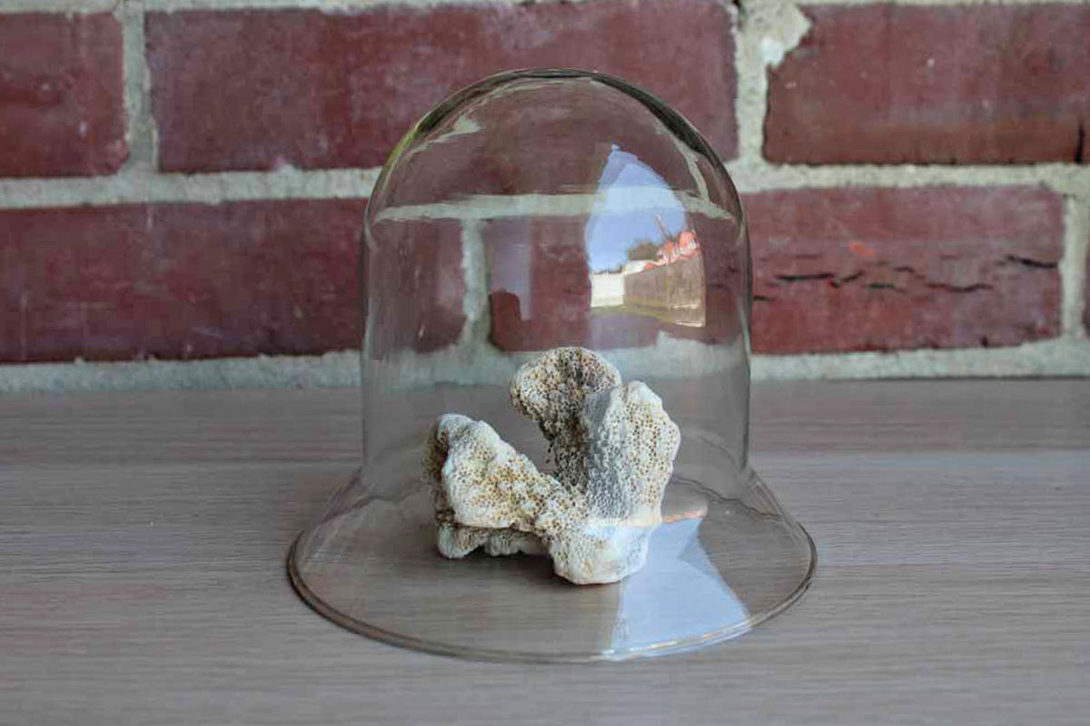 Clear Glass Cloche with Gently Flared Rin