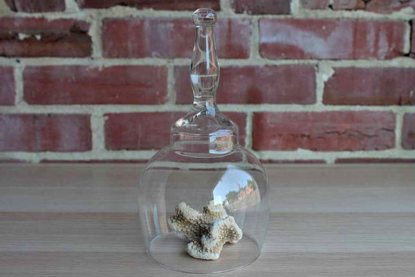 Clear Glass Handled Display Cloche