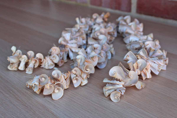 Cone-Shaped White and Cream Seashells from the Philippines, String of 3