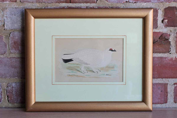 Framed Colorful Print of a Pheasant