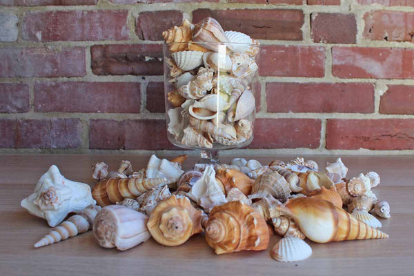 Five Pounds of Natural Indian Ocean Seashells