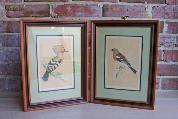 Genuine Old Prints of Birds, A Pair