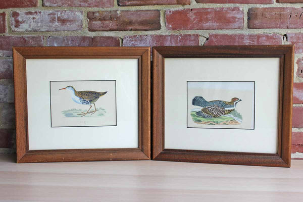 Colorful Lithograph Prints of Birds
