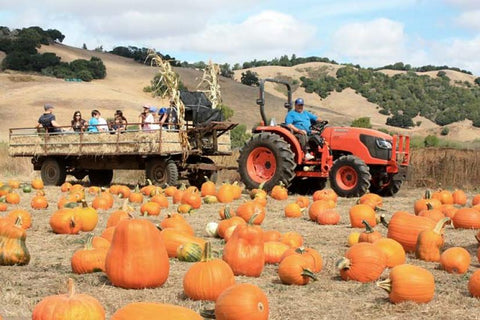 Nicasio Pumpkin Patch