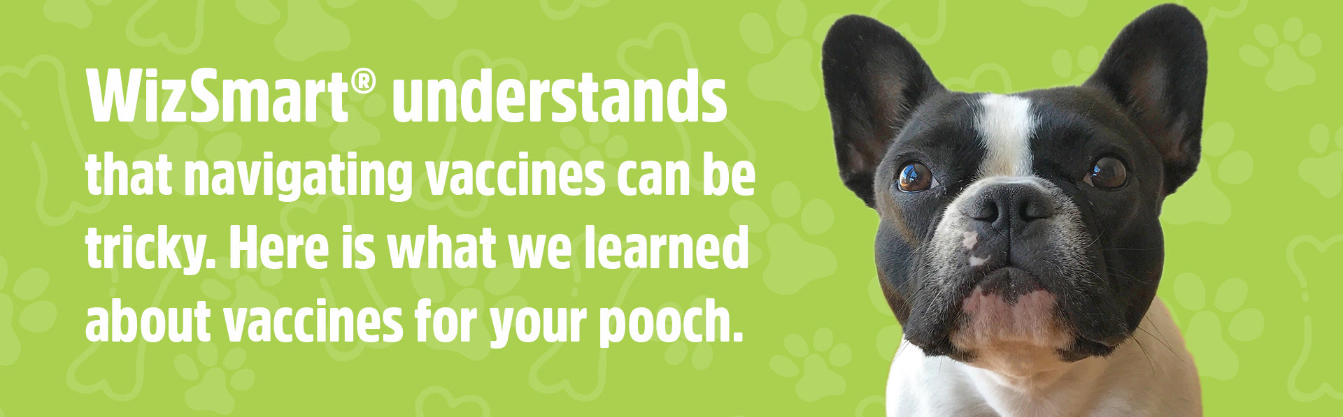 Dog vaccines what you need to know