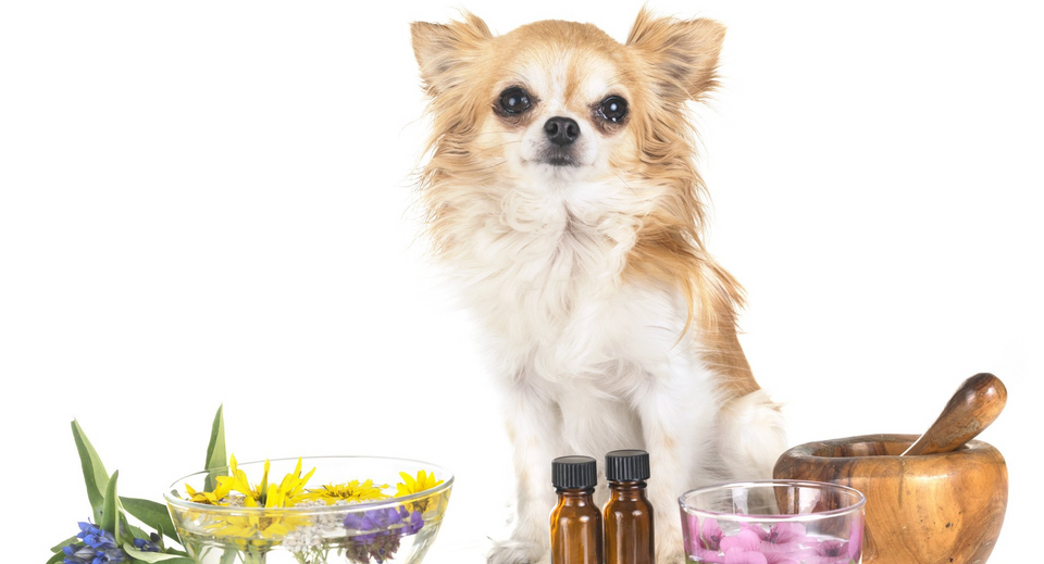 Natural Puppy Remedies for Urine Odor
