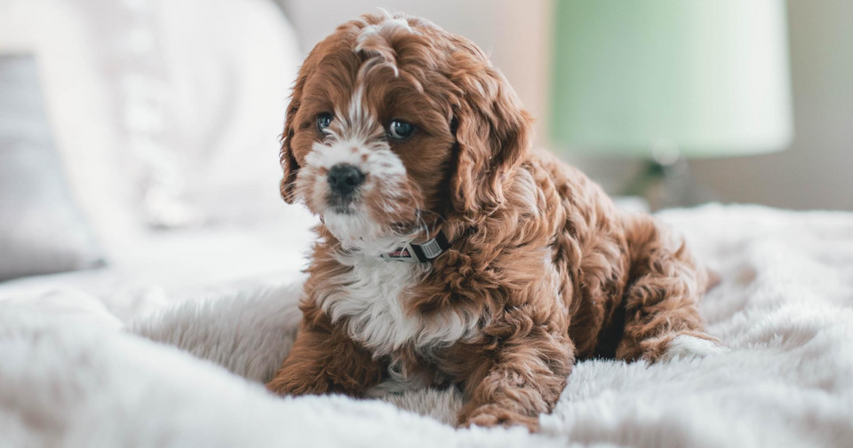 Preventing Puppy Accidents
