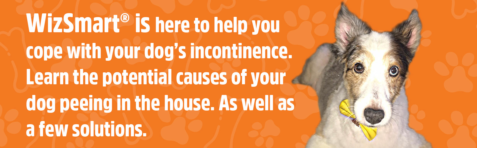 Incontinence and Your Senior Dog