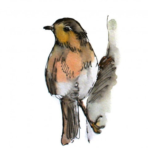 illustration oiseau à l'aquarelle