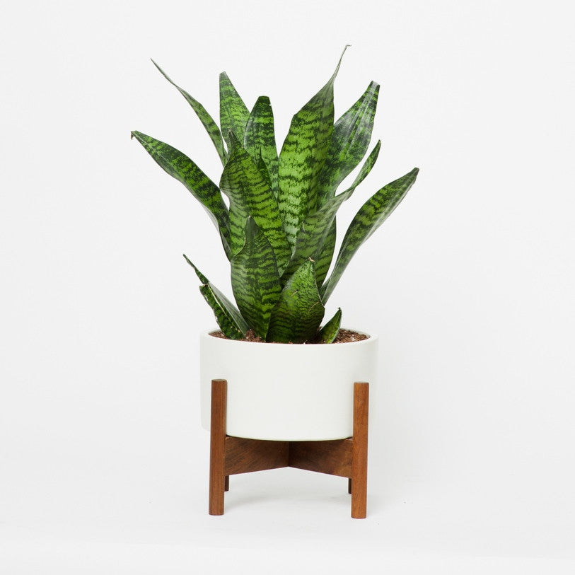object in for indoor ideas white medium with intended modern planter uk stand plant outdoor tall oak modernica pot