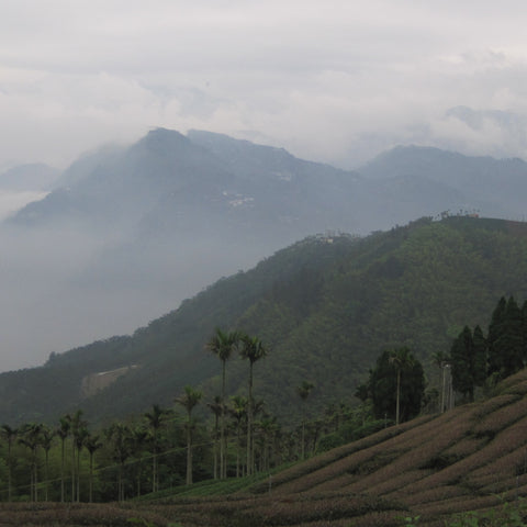 view from Meishan, near Alishan (Taiwan oolong tea)