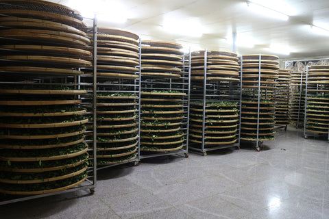Racks of oxidising leaves