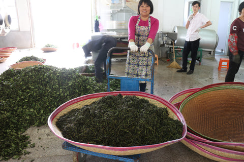 Worker with leaves immediately after rolling