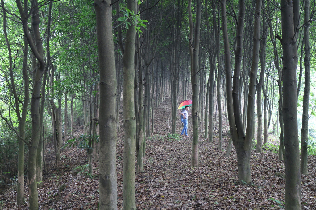Walking through the forest near Guangzhou